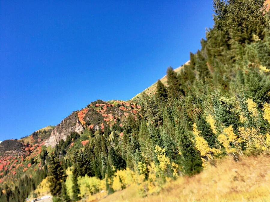 Fall Into Utah